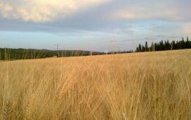 Eerste hardloop-ontdekkingstocht door de 'velden' van Gard