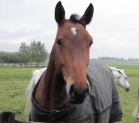 Paard, en link naar fotoalbum