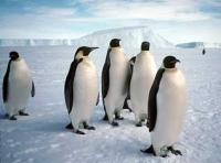 ja ja, sex met pinguins, da's pas koud