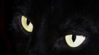 ogen in het donker