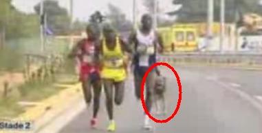 Hond op parcours