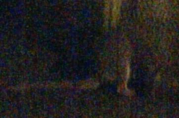 Skippy in het donker