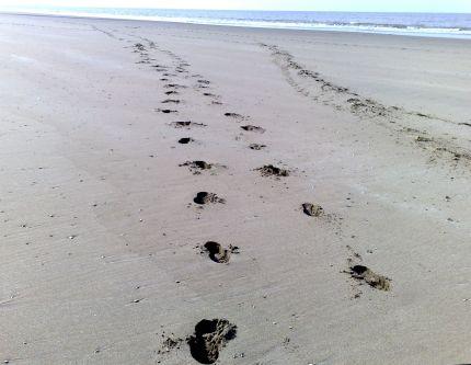 Bloggersvoeten in het zand